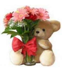 12_Pink_Gerberas_Bunch_And_1_Teddy_Bear_delivery