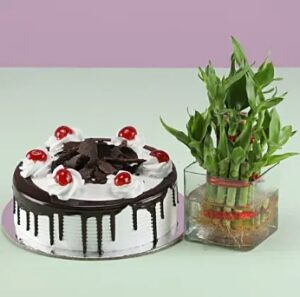 Black forest with plant