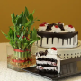 Black forest with plant 2