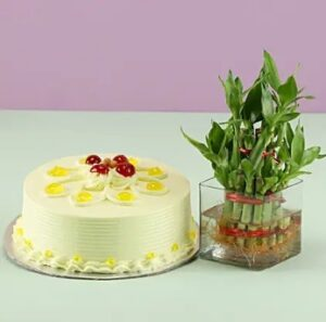 Butter scotch cake with Bamboo plant