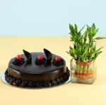 Chocolate cake with bamboo