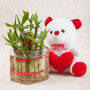Luck Bamboo with teddy