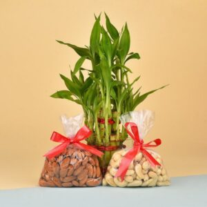 dry fruit with plant
